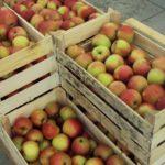 Идет поискответственных за неспособность экспортировать яблоки в Россию